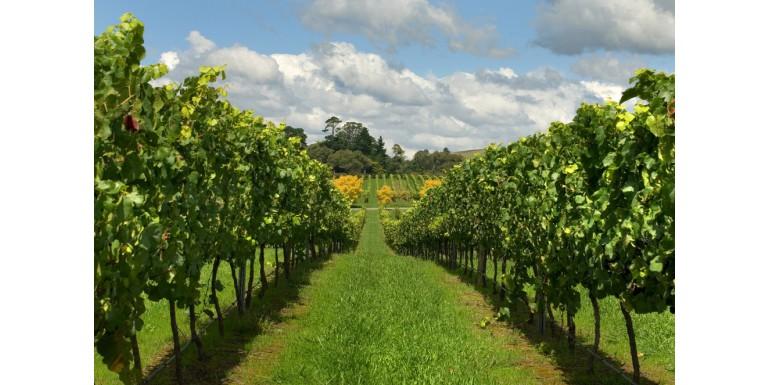 Cos'è il vino naturale